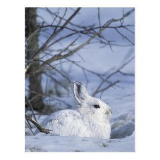 NA, USA, Alaska. Arctic National Wildlife Postcard