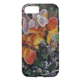 NA, USA, Alaska. Denali National Park. Bearberry 3 iPhone 7 Case