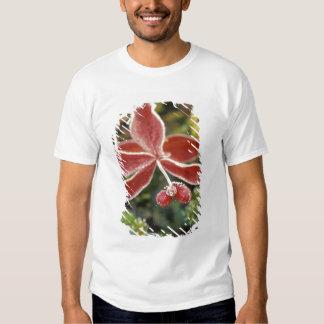 NA, USA, Alaska. Denali National Park, Wonder T-shirt