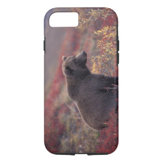 NA, USA, Alaska, Denali NP. A female grizzly iPhone 7 Case