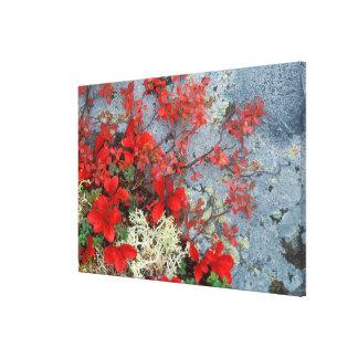 NA, USA, Alaska, Denali NP, Bear berry and Gallery Wrapped Canvas