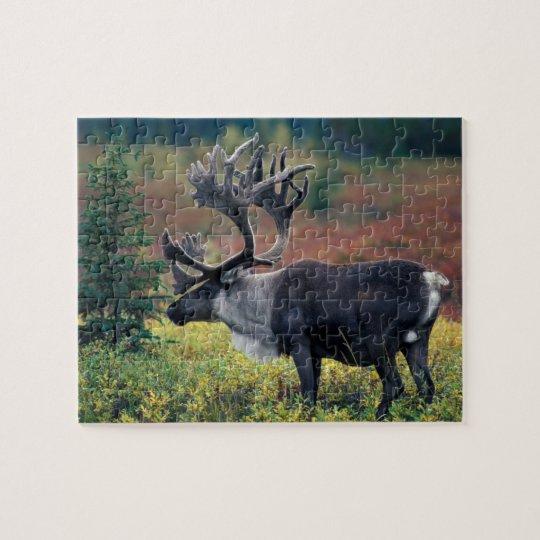 NA, USA, Alaska, Denali NP, Bull caribou 3 Jigsaw Puzzle