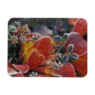 NA, USA, Alaska, Denali NP Frosted, fall-colored Rectangular Photo Magnet