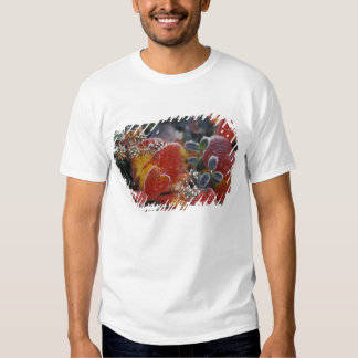NA, USA, Alaska, Denali NP Frosted, fall-colored T-shirts