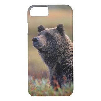 NA, USA, Alaska, Denali NP, Grizzly bear iPhone 7 Case