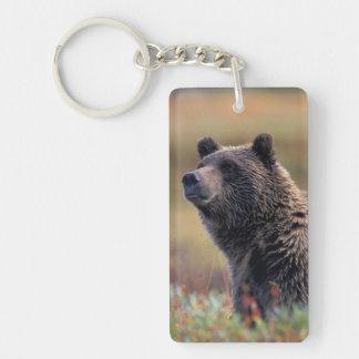 NA, USA, Alaska, Denali NP, Grizzly bear Key Ring