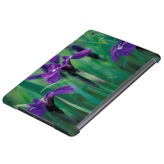NA, USA, Alaska, Knight Island, Wild iris