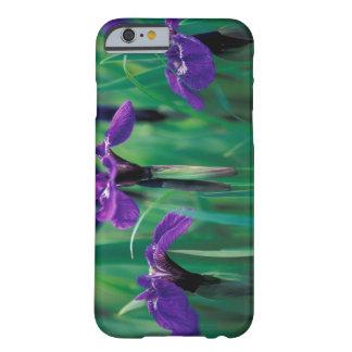 NA, USA, Alaska, Knight Island, Wild iris Barely There iPhone 6 Case