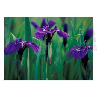 NA, USA, Alaska, Knight Island, Wild iris Cards