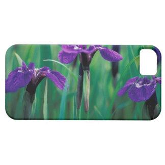 NA, USA, Alaska, Knight Island, Wild iris iPhone 5 Cases