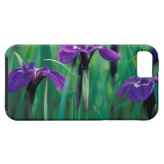 NA, USA, Alaska, Knight Island, Wild iris iPhone 5 Cover
