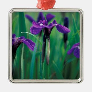 NA, USA, Alaska, Knight Island, Wild iris Ornament