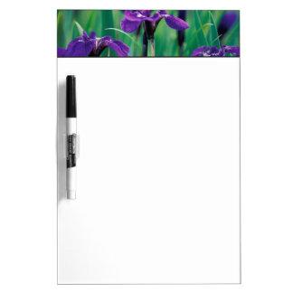 NA, USA, Alaska, Knight Island, Wild iris Dry Erase Whiteboards