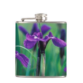 NA, USA, Alaska, Knight Island, Wild iris Flask