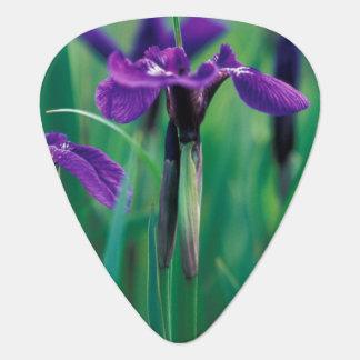 NA, USA, Alaska, Knight Island, Wild iris Guitar Pick