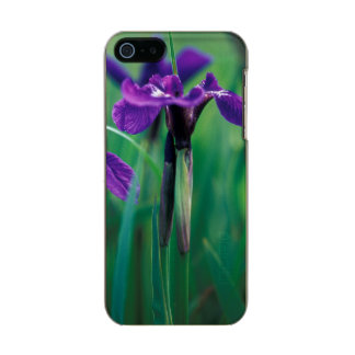 NA, USA, Alaska, Knight Island, Wild iris Incipio Feather® Shine iPhone 5 Case