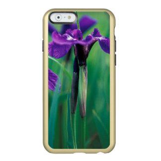 NA, USA, Alaska, Knight Island, Wild iris Incipio Feather® Shine iPhone 6 Case