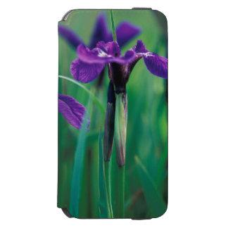 NA, USA, Alaska, Knight Island, Wild iris Incipio Watson™ iPhone 6 Wallet Case