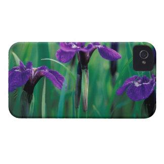 NA, USA, Alaska, Knight Island, Wild iris iPhone 4 Case