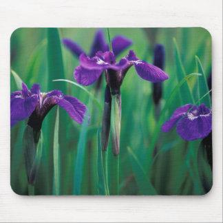 NA, USA, Alaska, Knight Island, Wild iris Mousepads