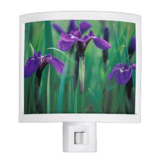 NA, USA, Alaska, Knight Island, Wild iris Night Light