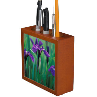NA, USA, Alaska, Knight Island, Wild iris Pencil/Pen Holder
