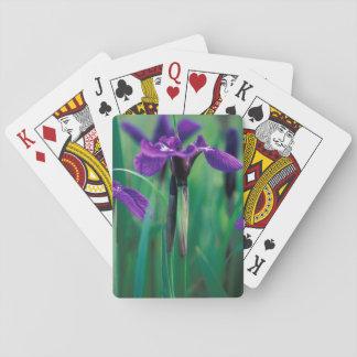 NA, USA, Alaska, Knight Island, Wild iris Poker Cards