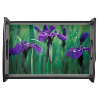 NA, USA, Alaska, Knight Island, Wild iris Serving Tray