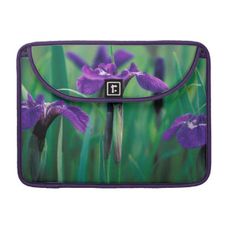 NA, USA, Alaska, Knight Island, Wild iris Sleeve For MacBook Pro