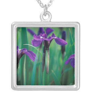 NA, USA, Alaska, Knight Island, Wild iris Square Pendant Necklace