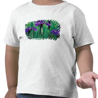 NA, USA, Alaska, Knight Island, Wild iris Tee Shirts