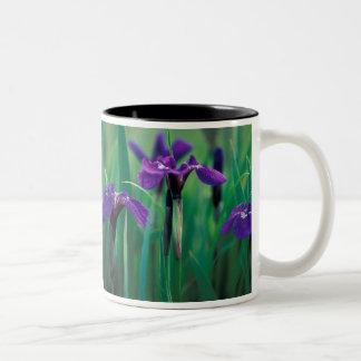 NA, USA, Alaska, Knight Island, Wild iris Two-Tone Mug