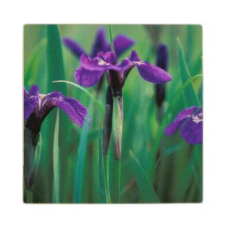 NA, USA, Alaska, Knight Island, Wild iris Wood Coaster