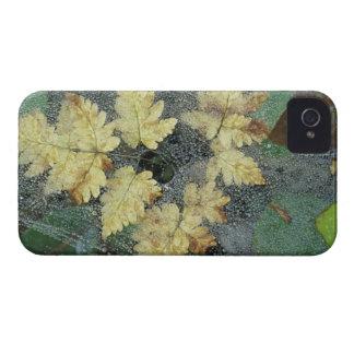 NA, USA, Alaska, Nancy Lake. Dew on spiderweb iPhone 4 Cover
