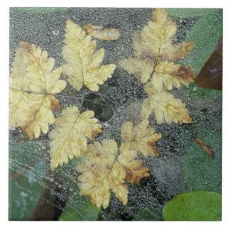 NA, USA, Alaska, Nancy Lake. Dew on spiderweb Large Square Tile