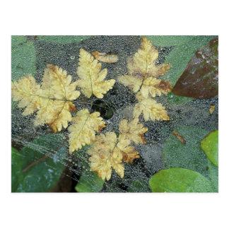 NA, USA, Alaska, Nancy Lake. Dew on spiderweb Postcard