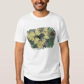 NA, USA, Alaska, Nancy Lake. Dew on spiderweb Shirt