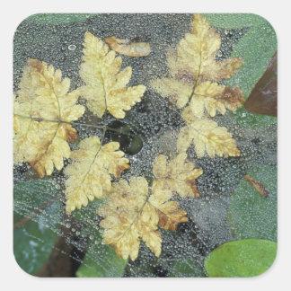 NA, USA, Alaska, Nancy Lake. Dew on spiderweb Square Sticker