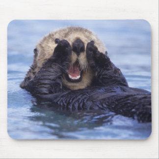 NA USA Alaska Sea otters are the largest Mousepad