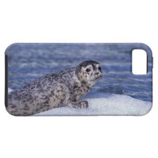 NA, USA, Alaska, Southeast Alaska, Le Conte iPhone 5 Cases