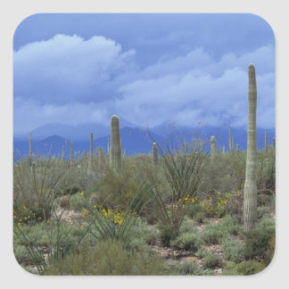 NA, USA, Arizona, Saguaro National Monument, Square Sticker