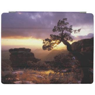 NA, USA, Arizona, Tucson, Sunset and lone iPad Cover