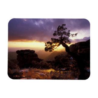 NA, USA, Arizona, Tucson, Sunset and lone Rectangular Photo Magnet