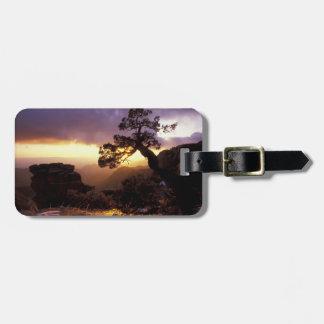 NA, USA, Arizona, Tucson, Sunset and lone Tags For Luggage