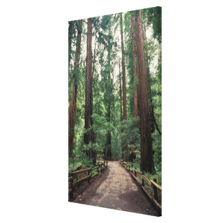 NA, USA, California, Marin County, Muir Woods Canvas Print