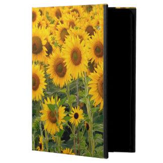 Na, USA, Colorado, Sunflowers iPad Air Covers