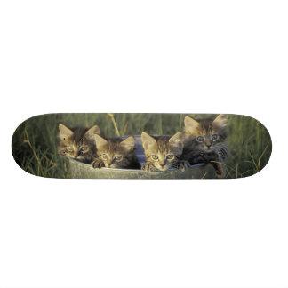 NA, USA, Florida, rural Florida. Eight-week-old Custom Skate Board