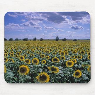 NA, USA, Kansas, Sunflower crop Mouse Pad