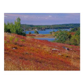 NA, USA, Maine. Blueberry Barrens. Postcard