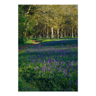 NA, USA, Oregon, Salem. Field of camas and 3 Poster